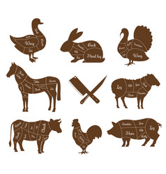 Meat animal body parts isolated livestock pets vector