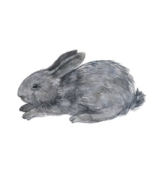 little fluffy bunny vector image