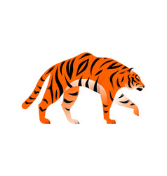 Bengal tiger animal isolated vector