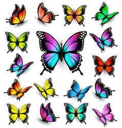 Colorful butterflies set vector