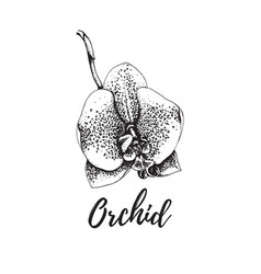 Orchid isolated vintage tropical flower vector
