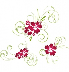 hibiscus floral elements vector image vector image