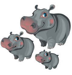 Cartoon hippo on white background animals vector