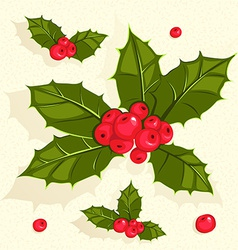 Christmas holly berries vector
