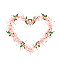 Clerodendrum Paniculatum Flowers in Heart Shape vector