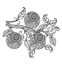 Orange and leaves hand drawn in black and white vector image