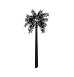 Palm tree nature decoration botanical vector