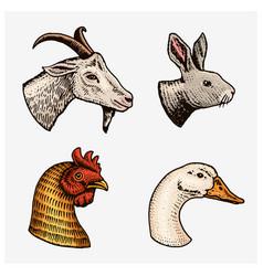 farm animals head a domestic goat cock goose vector image