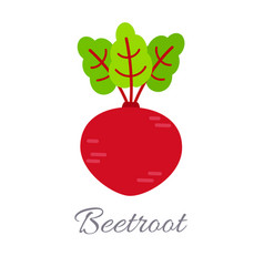 beet icon with title vector image