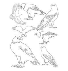 eagle line art vector image