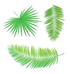 palm branch set long round leaves with sharp edges vector image
