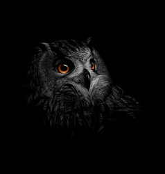 portrait of a long-eared owl on a black background vector image