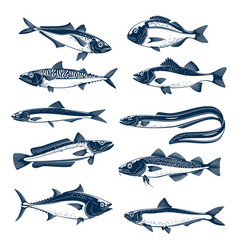 sea fish icon set for seafood and fishing design vector image