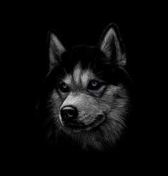 Portrait head siberian husky vector