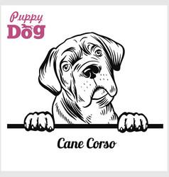 Puppy cane corso - peeking dogs - breed face head vector