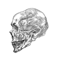 Sketch of profile human skull Hand drawing in vector image