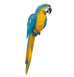 parrot polygon style vector image vector image