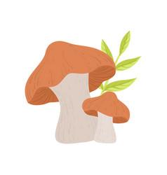 Forest edible mushroom wild organic product vector