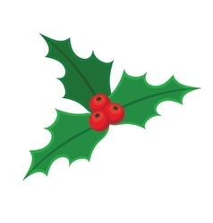 Holly berry Christmas vector image