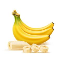 Ripe banana bunch realistic fresh fruit vector