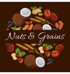 Nuts and grains in round shape emblem vector