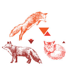 3 hand drawn foxes in different poses vector image