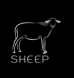 sheep on black background farm animals vector image
