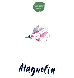 Flower of magnolia watercolor vector