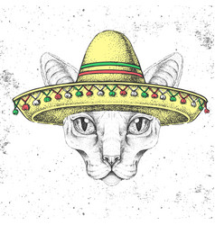 Hipster animal sphynx cat wearing a sombrero hat vector