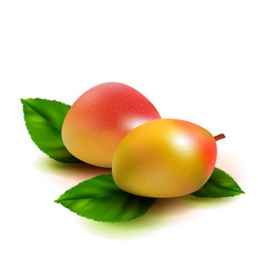 realistic mango fruit with leaves isolated on vector image