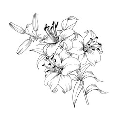 white lily flower vector image