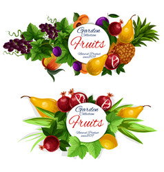 fruit and berry food labels vector image