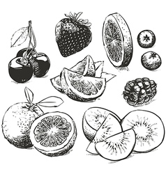 Hand drawn collection of fruits sketch vector image