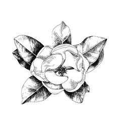 hand drawn magnolia branch vector image
