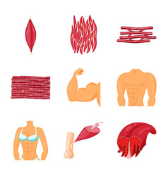 Isolated object of muscle and cells sign set of vector