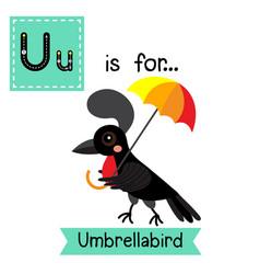 Letter u tracing umbrellabird vector