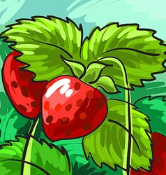 Ripe strawberries on a green background for your vector image