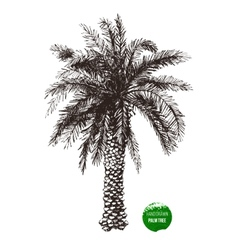 hand drawn palm tree vector image