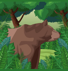 Bear in the jungle vector