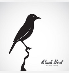 black bird on white background animal easy vector image