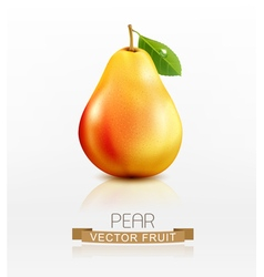 pear isolated on white background vector image