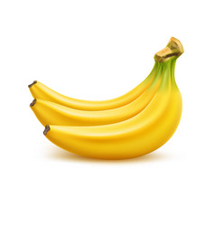 ripe banana bunch realistic fresh fruit vector image