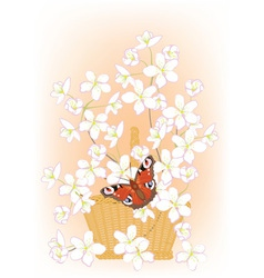 Flowering branches of cherry in a basket vector