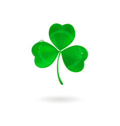 green three leaf clover with dew drops on white vector image