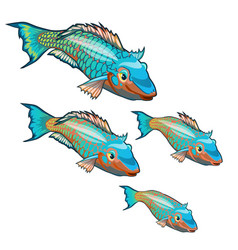 growth stage fancy fish with colorful vector image