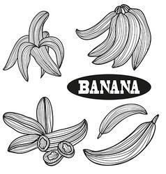 Hand drawn banana fruits vector