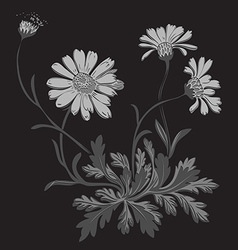 Hand drawn Dandelion flowers isolated on black vector