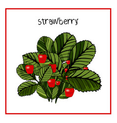 icon ripe strawberry with leaves vector image