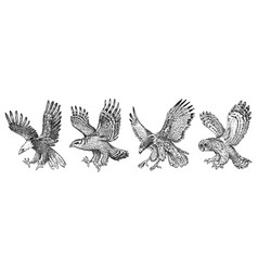 set wild birds goshawk pallid harrier black vector image
