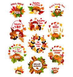 Autumn sale label set of fall vegetable and leaf vector